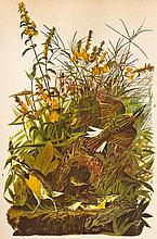 Audubon Meadowlark The Birds of America c.1946.