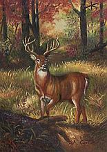 5 x 7 Oil on Board ~Stag in the Forest~ Signed