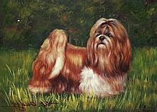 5 x 7 Oil on Board ~Shih Tzu in Field~ Signed