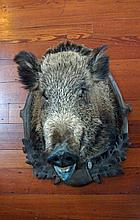 MOUNTED BOAR