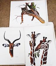 Harm & Younger Signed Wildlife Print
