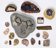 Fort lot de fossiles et de coquillages