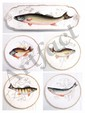 13 Pc. Haviland Limoges Fish Set