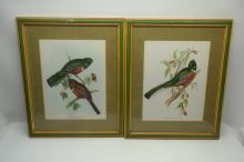 Song Birds by Gould