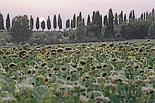 THE SEASONS IN CHIANTI, ITALY NO.18