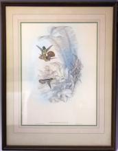 J. GOULD & H.C. RICHTER HUMMINGBIRDS LITHOGRAPH