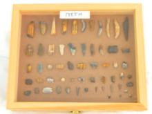Assorted Fossilized Teeth in Wooden Display Box