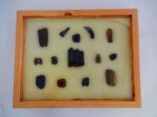 14 Fossilized Teeth in Wooden Display Box