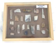 20 Pieces Petrified Wood in Wood Display Box