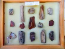 15 Pieces Petrified Wood in Locking Display Box