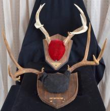 Two Mounted Deer Antler Sets