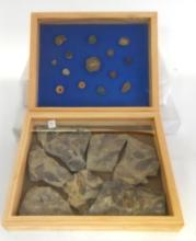 Fish Fossils & Vertebrae in Wooden Display Boxes