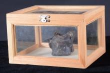 Petrified Vertebrae in Display Box