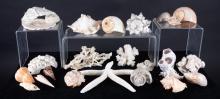 Seashells, Coral & Starfish