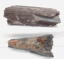 Two Dinosaur Bones