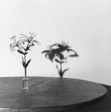 MAPPLETHORPE, ROBERT (1946-1989)
