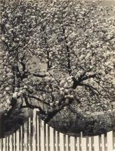 NORMAN, DOROTHY (1905-1997) Select group of 3 early photographs,