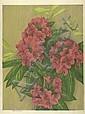 LUIGI RIST Rhododendron.