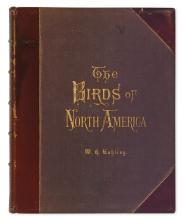 (BIRDS.) Studer, Jacob H. The Birds of North America.