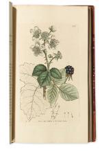 (BOTANICAL.) Sowerby, James; and Smith, James Edward. English Botany; Or, Coloured Figures of British Plants.