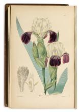 (BOTANICAL.) Sweet, Robert; Lindley, John; Don, David. The Ornamental Flower Garden and Shrubbery.