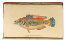 (FISH.) Donovan, E[dward]. The Natural History of British Fishes, including Scientific and General Descriptions.