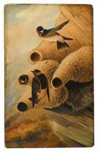 AUDUBON, JOHN JAMES (after); KIDD, JOSEPH BARTHOLOMEW (painter). Cliff Swallows.