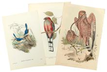 GOULD, JOHN. Group of eight hand-colored lithographs of birds,