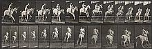 MUYBRIDGE, EADWEARD (1830-1904) Equestrian, from Animal Locomotion, plate 647.