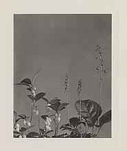 LINCOLN, EDWIN HALE (1828-1938) Suite of 20 photographs from