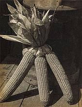 ULMANN, DORIS (1882-1934) Corn study.