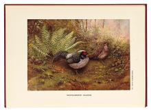 BEEBE, CHARLES WILLIAM. A Monograph of The Pheasants.