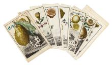 (FRUIT.) Volckamer, Johann Christoph. Thirteen hand-colored engraved plates of citrus fruit,