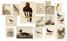 (BIRDS.) Group of 15 watercolors of birds,