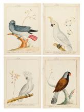 (BIRDS.) Martinet, Francois Nicholas (after). Four watercolors of parrots,