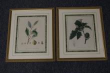 Pair of Italian Botanical Prints 1832
