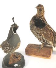 Pair Vintage Taxidermy Birds on stands