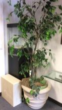 Concrete planter w platform and ficus