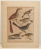 Alexander Wilson 'Brown Thrush' Engraving by A. Lawson
