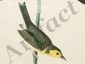 Aquatint John James Audubon Hooded Warbler