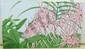 AOC Adam Konigsberg Pink Flowers