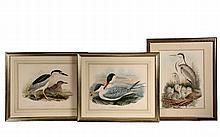(3) BRITISH ORNITHOLOGICAL PRINTS - John Gould (1804-1881) & Henry Constantine Richter (1821-1902) from