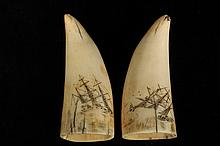 PAIR OF SCRIMSHAWN WHALE TEETH - Two Small 19th c