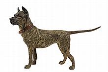 AUSTRIAN BRONZE FIGURE - Cold Painted Standing Great Dane with a red collar, in an alert stance with tail extended, unmarked, circa 189