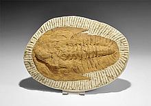 Natural History - Trilobite Fossil in Matrix