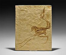 Natural History - Bird Fossil Museum Replica