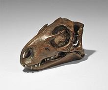 Natural History - Hypsilophodon Dinosaur Skull Museum Replica