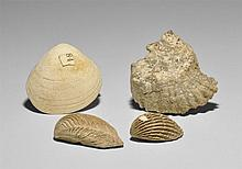 Natural History - Mollusc Fossil Group