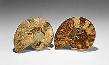 Natural History - Cut and Polished Ammonite Halves Pair
