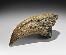 Natural History - Tyrannosaurus Rex Dinosaur Claw Museum Replica